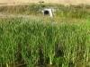 Zbiornik retencyjny - roślinność